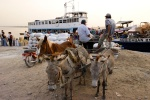 donkeys as mean of transportation
