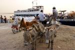 donkeys as mean of transportation
