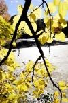 yellow 06