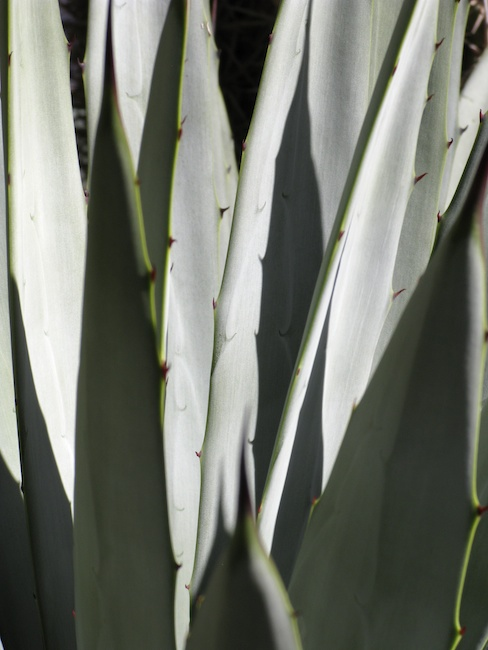 silvery blades