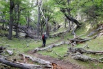 trekking in a Patagonian oaks' forest